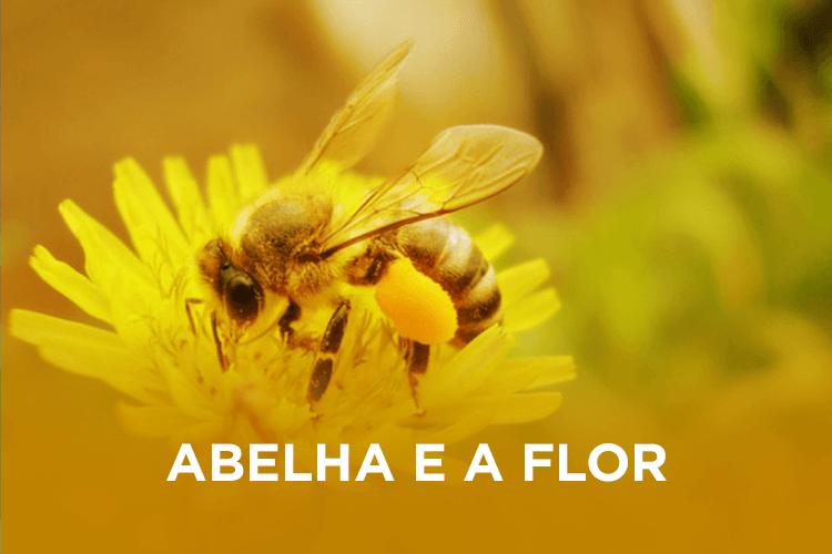 apisantos galeria abelhaeaflor